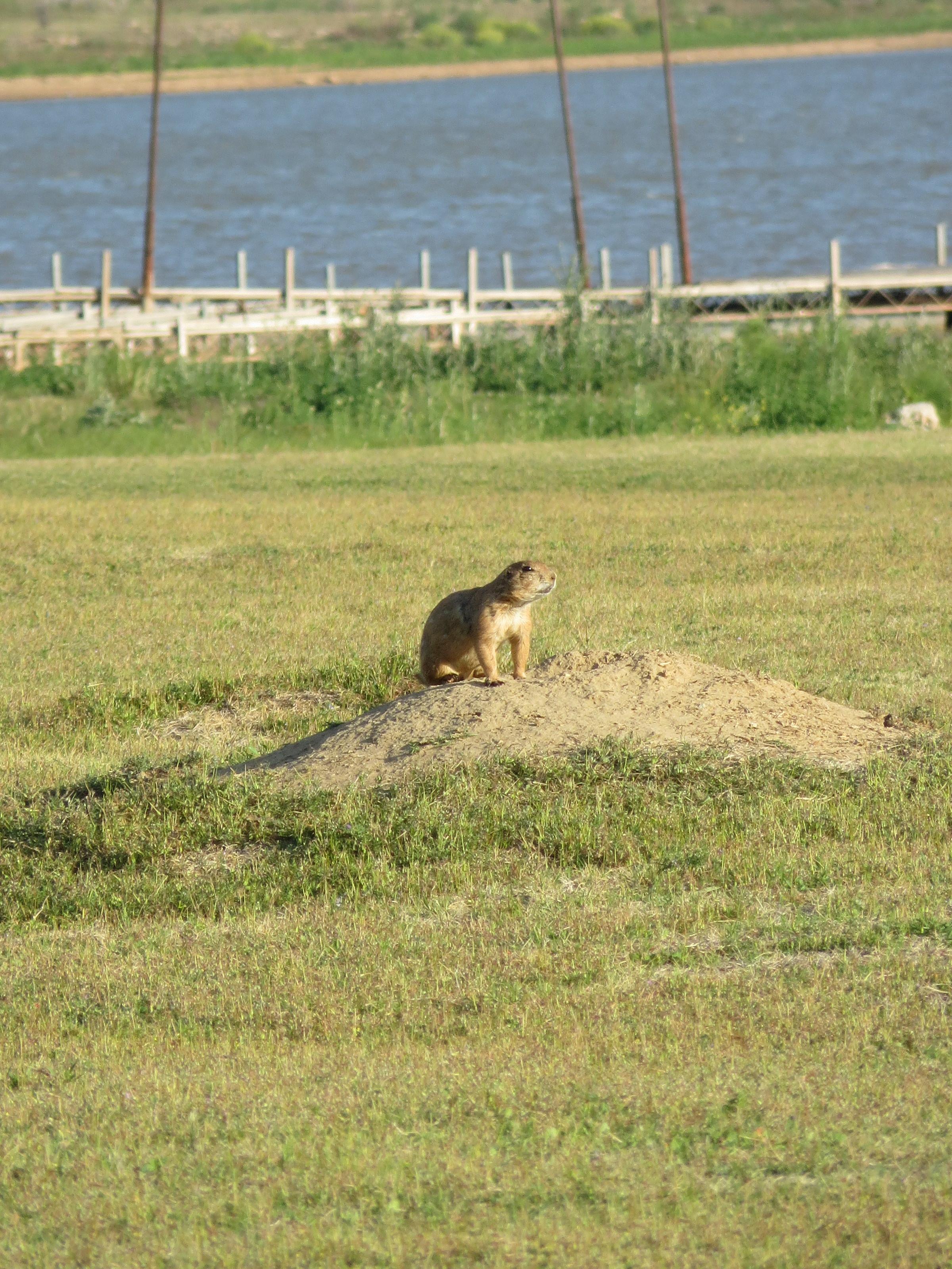 Lady Bird Lake Dog Park