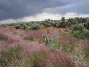 Georgous spring storm