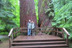 Twin 1000 yr old Douglas firs