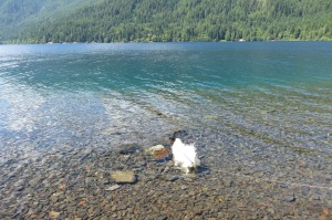 The cristal clear waters of  glacier fed Lake Crescent