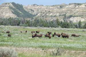 The ND badlands in the Theodore Roosevelt NP